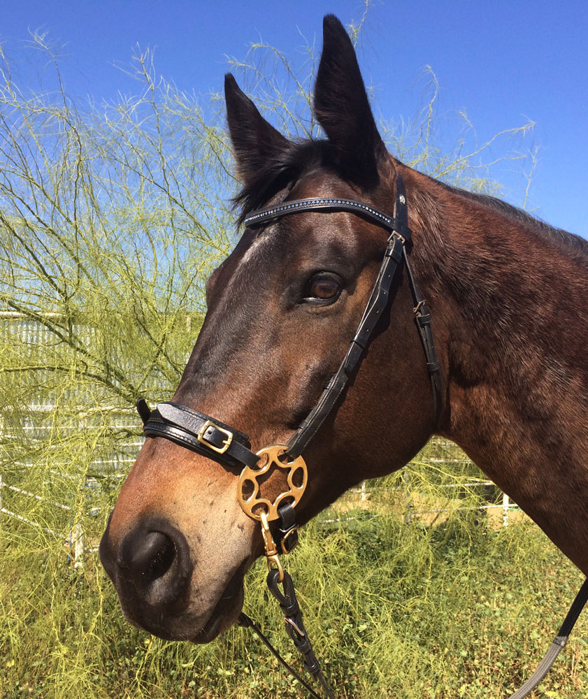 Types of Bridles and How to Choose the Right One | Types ...
